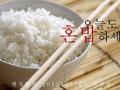 혼밥(혼자 밥먹기) 현상조사 보고서