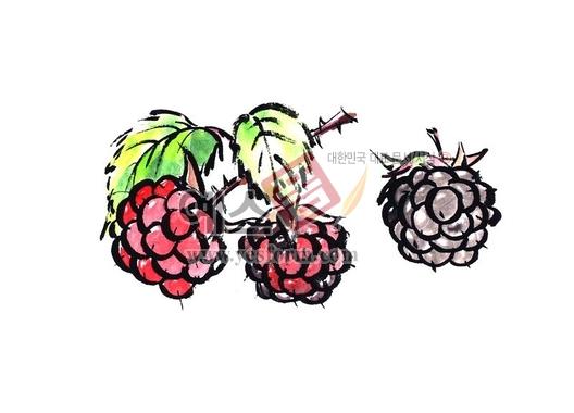 미리보기: 산딸기 - 손글씨 > 캘리그래피 > 동/식물