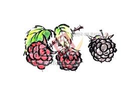 섬네일: 산딸기 - 손글씨 > 캘리그래피 > 동/식물