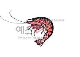 섬네일: 새우2 - 손글씨 > 캘리그래피 > 동/식물