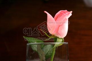 꽃/식물_127