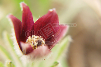 꽃/식물_347