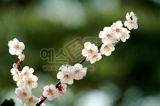 꽃/식물_452