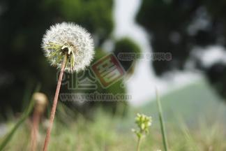 꽃/식물_497