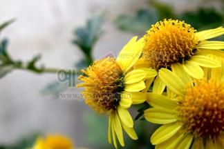 꽃/식물_605