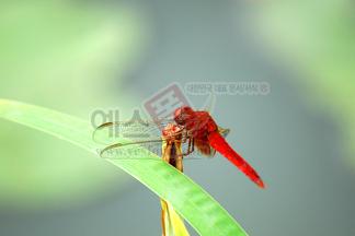 곤충/동물/선물_57