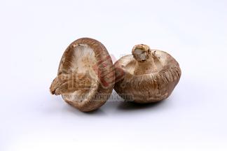 버섯,송이버섯