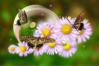 나비,호랑나비,국화,자연,생태