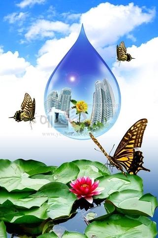 나비,나방,호랑나비,물방울,연꽃,구름