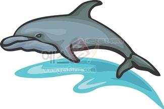 돌고래,고래